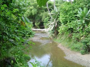 Creek on Caribbean Timberland