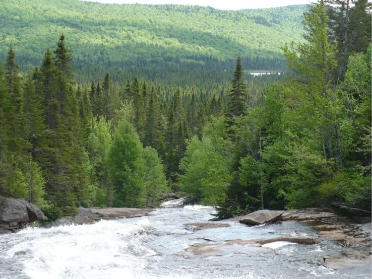 River on Quebec Forestland