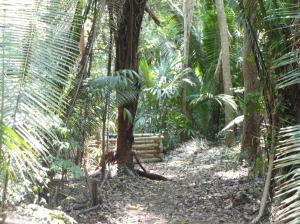 Yalbac Forest Belize
