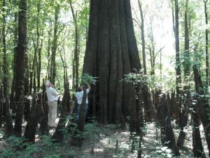 Big Cypress on ATCO