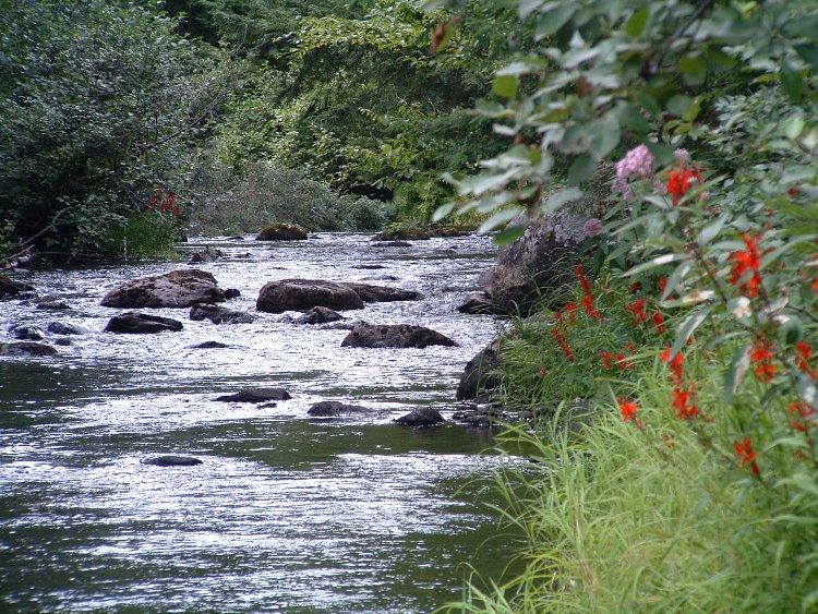River on Fraser