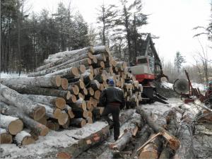 Logs Leavitt Plantation Winter