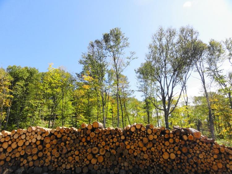 Logs on Quebec Forestlands