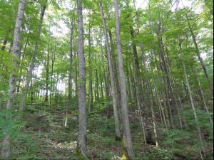 Allegheny Forestlands