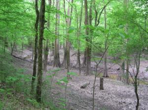 Fordyce Cypress Bottom